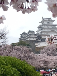桜の姫路城.jpg