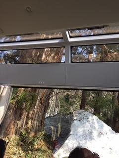 立山杉の林.jpg